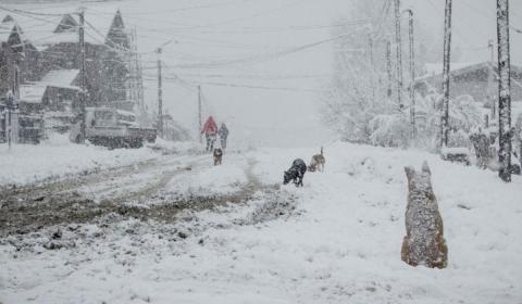 Nieve en el barrio